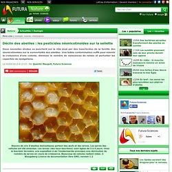 Déclin des abeilles : les pesticides néonicotinoïdes sur la sellette