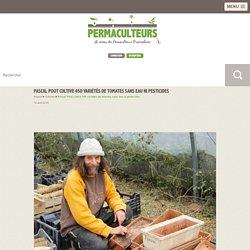 Pascal Poot cultive 450 variétés de tomates sans eau ni pesticides
