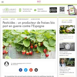 Pesticides : un producteur de fraises bio part en guerre contre l'Espagne