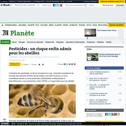 Pesticides : un risque enfin admis pour les abeilles