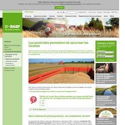 Utilité des pesticides : sécuriser les récoltes
