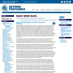 Beyond Pesticides Daily News Blog » Blog Archive Vetiver Grass Repels Termites, Prevents Flooding - Beyond Pesticides Daily News Blog
