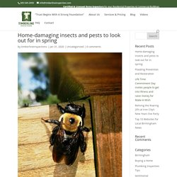 Pests that can Damage Alabama Homes