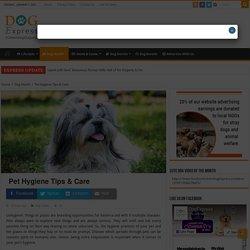 Pet Hygiene Tips & Care