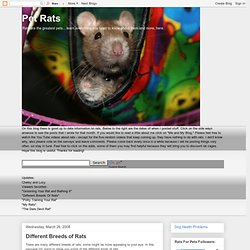 Different Breeds of Rats