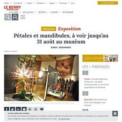 Pétales et mandibules, à voir jusqu'au 31 août au muséum - Bourges (18000) - Le Berry Républicain