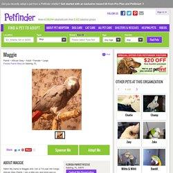 Meet Maggie, a Petfinder adoptable African Grey Parrot in Sebring, FL