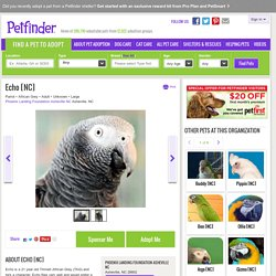 Meet Echo [NC], a Petfinder adoptable African Grey Parrot in Asheville, NC