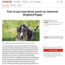 Tout ce que vous devez savoir sur American Shepherd Puppy