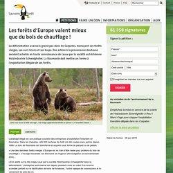 Les forêts d'Europe valent mieux que du bois de chauffage