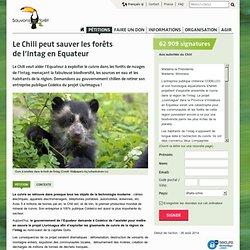 Le Chili peut sauver les forêts de l'Intag en Equateur