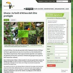 Ghana : la forêt d'Atiwa doit être protégée