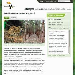 Brésil : nature ou eucalyptus ?