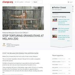 STOP TORTURING ORANGUTANS AT MELAKA ZOO