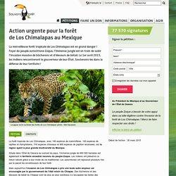 Action urgente pour la forêt de Los Chimalapas au Mexique