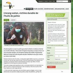 L'orang-outan, victime durable de l'huile de palme