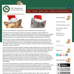 Pets And The Holiday Season