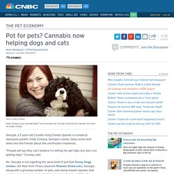Pot for pets? Cannabis now helping dogs and cats