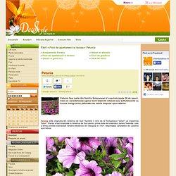 Petunia - Flori de apartament si terasa