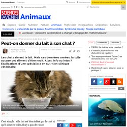 Peut-on donner du lait à son chat