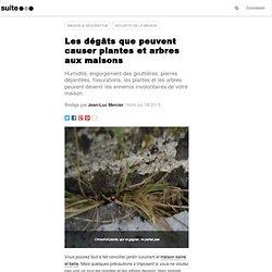 Les dégâts que peuvent causer plantes et arbres aux maisons