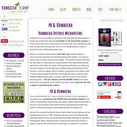 pH & Kombucha - Kombucha Kamp