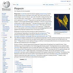 Phagocyte