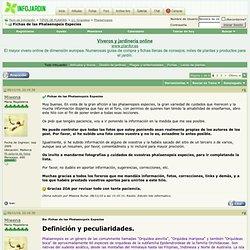 Fichas de las Phalaenopsis Especies