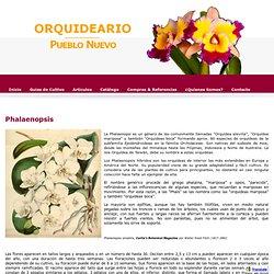 Phalaenopsis - Orquideario Pueblo Nuevo
