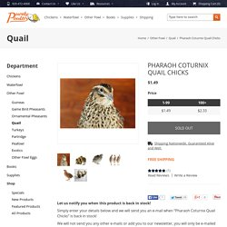Pharaoh Coturnix Quail Chicks for sale