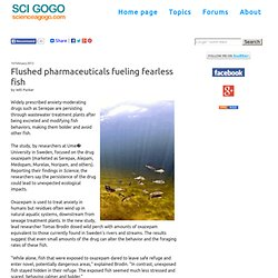 Flushed pharmaceuticals fueling fearless fish