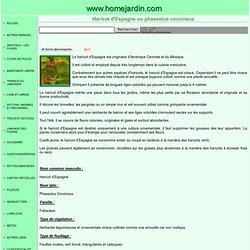 Haricot d'Espagne ou phaseolus coccineus, fiche technique complète