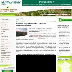 ARVALIS 08/01/15 PhénoField : une plateforme dédiée à l'étude de la tolérance à la sécheresse