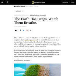The Earth Has Lungs. Watch Them Breathe. – Phenomena: Curiously Krulwich