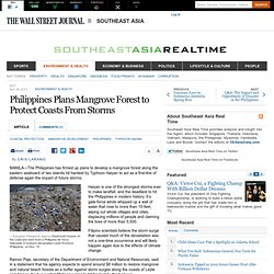 Philippines Plans Mangrove Forest to Protect Coasts From Future Storms - Southeast Asia Real Time