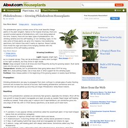 Growing Philodendron Houseplants