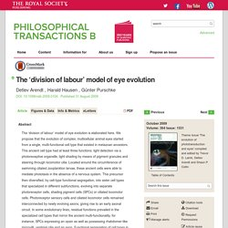 The 'division of labour' model of eye evolution