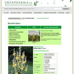 Bouillon blanc, Molène, Verbasci phlomoides, plante médicinale contre la toux, creapharma.ch