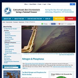 How We Save the Bay/The Issues/Dead Zones/Nitrogen & Phosphorus - Chesapeake Bay Foundation