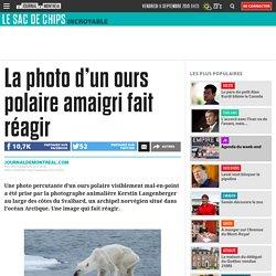 La photo d'un ours polaire amaigri fait réagir
