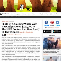 Photo Of A Sleeping Whale With Her Calf Just Won $120,000 At The HIPA Contest And Here Are 17 Of The Winners
