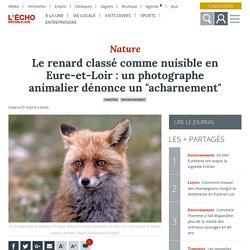 """L ECHO REPUBLICAIN 07/10/18 Le renard classé comme nuisible en Eure-et-Loir : un photographe animalier dénonce un """"acharnement"""""""