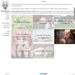 NATURE ANIMALE chiens,chats,chevaux,fauves,oiseaux, animaux,élevages, paysages ELEVAGES agence photo animalière, photographe animalier professionnel