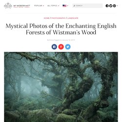 Photographer Captures the Enchanted Forests of Wistman's Wood