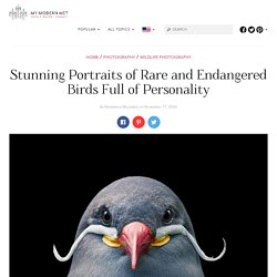 Photographer Tim Flach Captures Emotive Portraits of Fascinating Birds