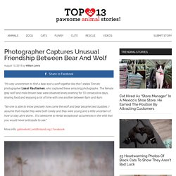 Photographer Captures Unusual Friendship Between Bear And Wolf