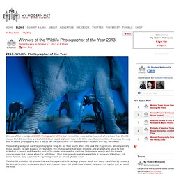 Winners of the Wildlife Photographer of the Year 2013