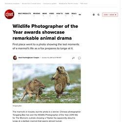 Wildlife Photographer of the Year awards showcase remarkable animal drama