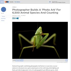 Photographer Builds A 'Photo Ark' For 6,500 Animal Species And Counting