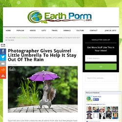 Photographer Gives Squirrel Little Umbrella To Help It Stay Out Of The Rain